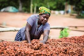 Cocoa Producers
