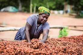 producteurs de cacao de Côte d'Ivoire et du Ghana